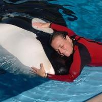 """Tilikum"" la orca de Seaworld mató a su entrenadora"