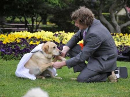 Hombre se caso con su Perra Labradora.